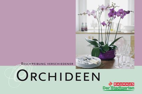 Bloemenbureau-Orchideen